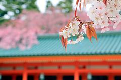 京都平安神宮.jpg